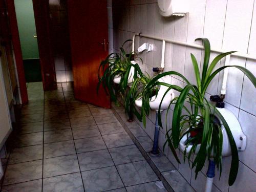 Женский туалет для преподавателей в МГУ