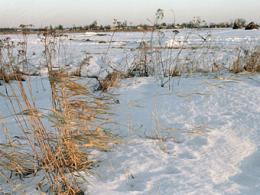 Власти Подмосковья возьмутся за применяемые сельхозземли