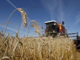 Налог на простаивающие сельхозземли в Московской области увеличится в 5 раз