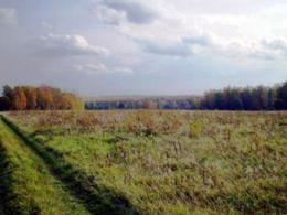 В Московской области будет свежий коттеджный населенный пункт